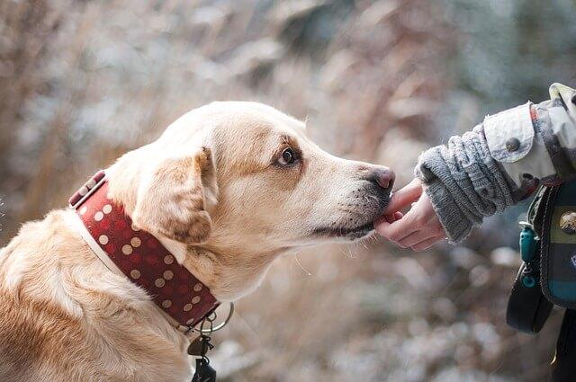 飼い主の手を嗅ぐ犬