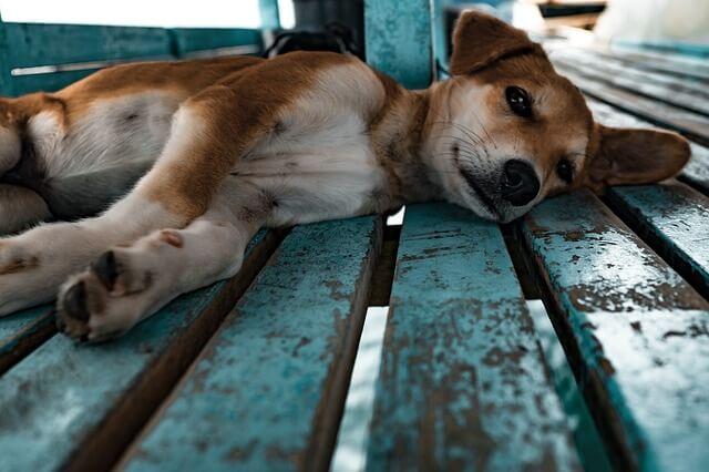 寝転がる子犬