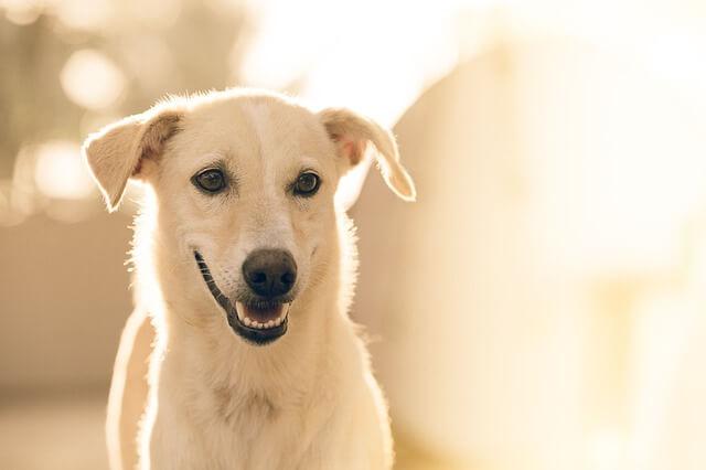 笑顔の白い犬
