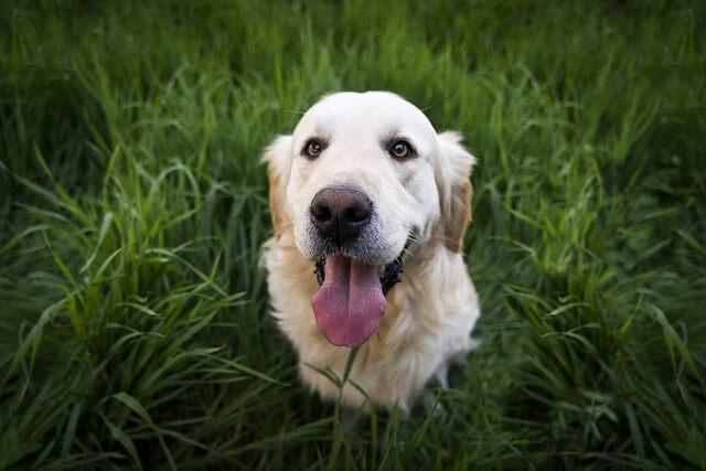 草の中から見上げる犬