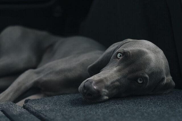 暗いところで寝る黒い犬