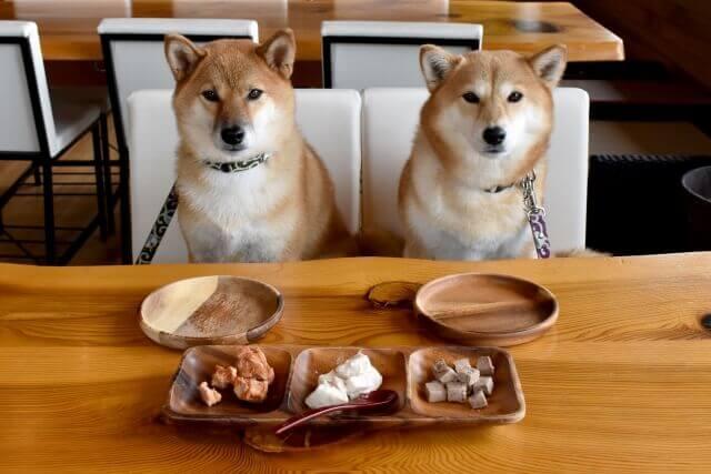 エサを待つ二匹の柴犬
