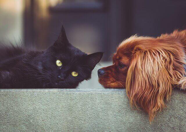 寝ている黒い猫と茶色の犬