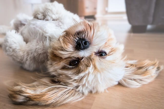 仰向けで寝る犬