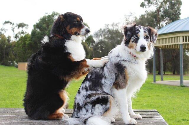 マッサージをする犬