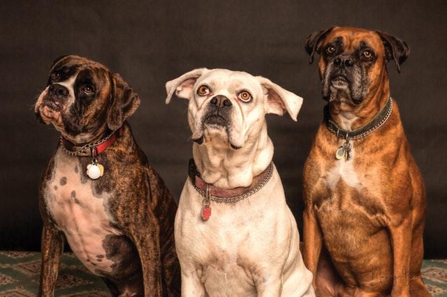 3匹並んだ犬