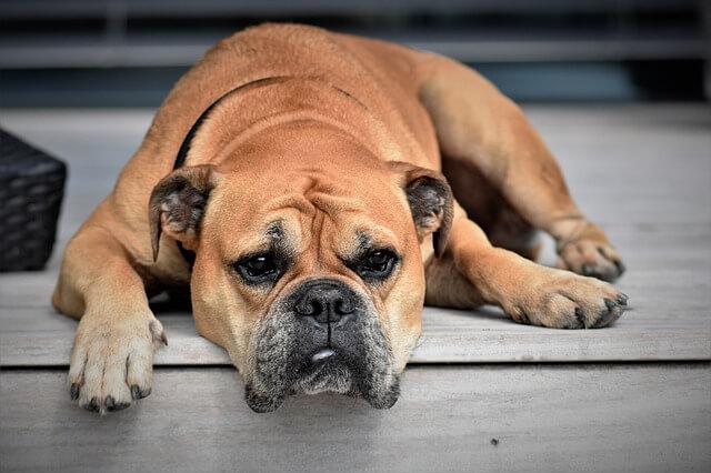暗い雰囲気の犬